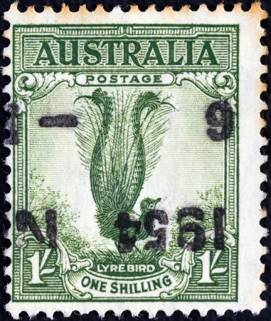 AUSTRALIA - CIRCA 1932: A stamp printed in Australia shows a lyrebird, circa 1932.  Stock Photo - 17298590
