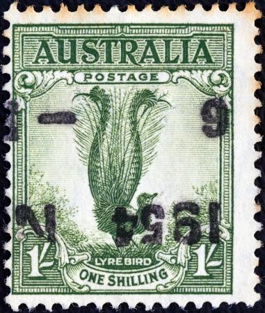 postes: AUSTRALIA - CIRCA 1932: A stamp printed in Australia shows a lyrebird, circa 1932.