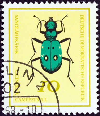 cicindela: GERMAN DEMOCRATIC REPUBLIC - CIRCA 1968: A stamp printed in Germany from the Useful Beetles issue shows Green Tiger beetle (Cicindela campestris), circa 1968.