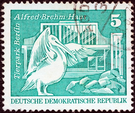 stempeln: GERMAN DEMOCRATIC REPUBLIC - CIRCA 1973: A stamp printed in Germany shows Eastern white pelican and Alfred Brehm House, Tierpark, Berlin, circa 1973.