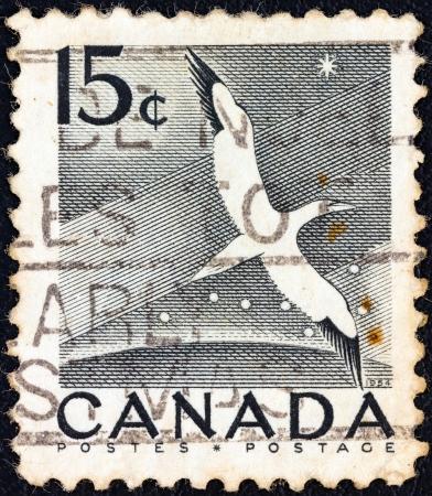 postes: CANADA - CIRCA 1954: A stamp printed in Canada shows a Northern Gannet seabird, circa 1954.