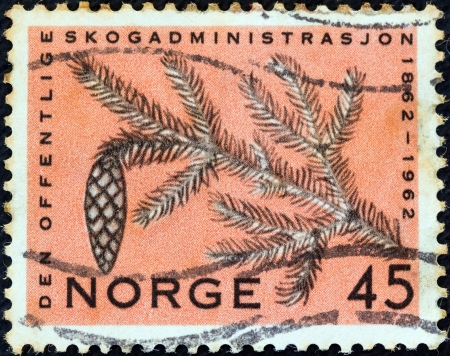 stempeln: NORWAY - CIRCA 1962: A stamp printed in Norway from the Centenary of state forestry administration issue shows branch of fir and cone, circa 1962.
