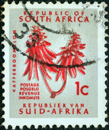 suid: SOUTH AFRICA - CIRCA 1961: A stamp printed in South Africa from the Republic issue shows Kafferboom flower (Erythrina caffra), circa 1961.