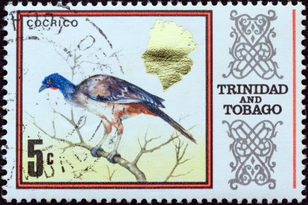 TRINIDAD AND TOBAGO - CIRCA 1969: A stamp printed in Trinidad and Tobago shows a Rufous-vented chachalaca (Cocrico) bird, circa 1969.