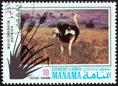 dependency: MANAMA DEPENDENCY - CIRCA 1971: A stamp printed in United Arab Emirates from the Wildlife conservation issue shows a Ostrich (Struthio camelus), circa 1971.  Editorial