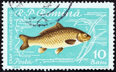 stempeln: ROMANIA - CIRCA 1960: A stamp printed in Romania from the Fishes issue shows a Common carp (Cyprinus carpio), circa 1960.  Editorial