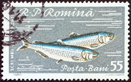 ルーマニア - 1960 年頃: 1960年年頃の「魚」問題番組黒海ニシンからルーマニアの印刷スタンプです。 報道画像