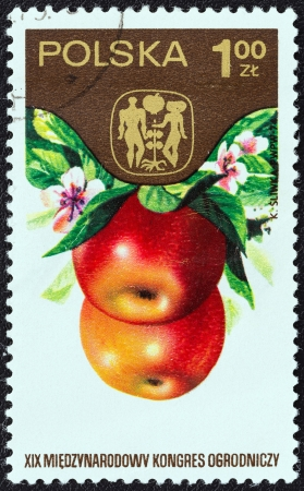 horticultural: POLAND - CIRCA 1974: A stamp printed in Poland from the 19th International Horticultural Congress, Warsaw. Fruits, Vegetables and Flowers issue shows Apples, circa 1974.  Editorial