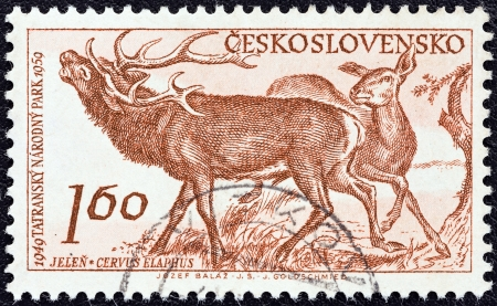CZECHOSLOVAKIA - CIRCA 1959: A stamp printed in Czechoslovakia from the 10th anniversary of Tatra National Park issue shows Red deers (Cervus elaphus), circa 1959.  Editorial