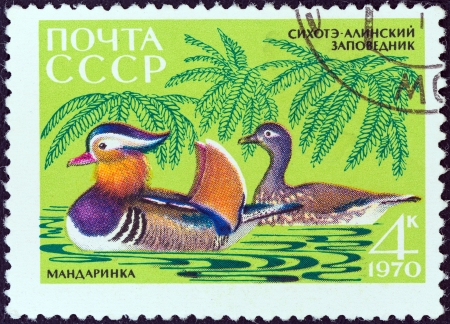 timbre: USSR - CIRCA 1970  A stamp printed in USSR from the  Fauna of Sikhote-Alin Nature Reserve  issue shows Mandarins, circa 1970