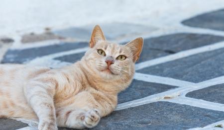 Cute cat in a Greek island Stock Photo