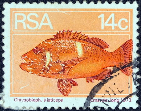 suid: SOUTH AFRICA - CIRCA 1974  A stamp printed in South Africa shows a Roman seabream  Chrysoblephus laticeps  fish, circa 1974