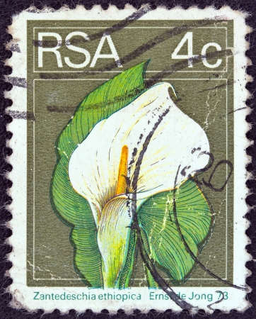 suid: SOUTH AFRICA - CIRCA 1974  A stamp printed in South Africa shows an Arum lily  Zanthedeschia ethiopica  flower, circa 1974