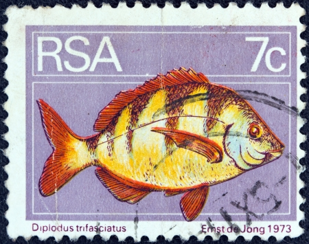 suid: SOUTH AFRICA - CIRCA 1974  A stamp printed in South Africa shows a Zebra seabream  Diplodus trifasciatus  fish, circa 1974   Editorial