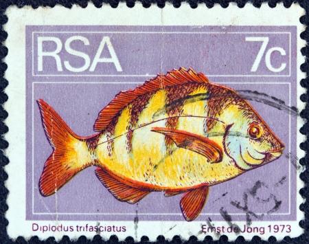 suid: SOUTH AFRICA - CIRCA 1974  A stamp printed in South Africa shows a Zebra seabream  Diplodus trifasciatus  fish, circa 1974   Editorial