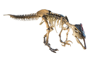 Megaraptor  Megaraptor namunhuaiquii  skeleton isolated