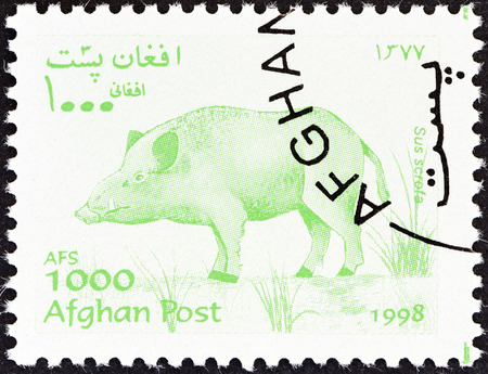 scrofa: AFGHANISTAN - CIRCA 1998  A stamp printed in Afghanistan from the  Wildlife  issue shows a Wild boar  Sus scrofa , circa 1998
