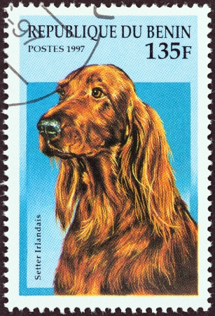 BENIN - CIRCA 1997  A stamp printed in Benin from the  Dogs  issue shows an Irish Setter, circa 1997