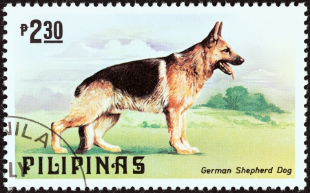 estampilla: PHILIPPINES - CIRCA 1979  A stamp printed in Philippines from the  Cats and Dogs   issue shows a German Shepherd, circa 1979