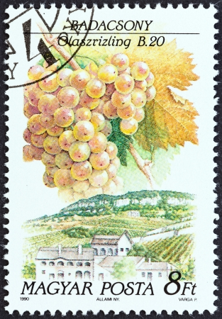magyar posta: HUNGARY - CIRCA 1990  A stamp printed in Hungary from the  Wine Grapes and Regions  1st series   issue shows Riesling, Badacsony, circa 1990