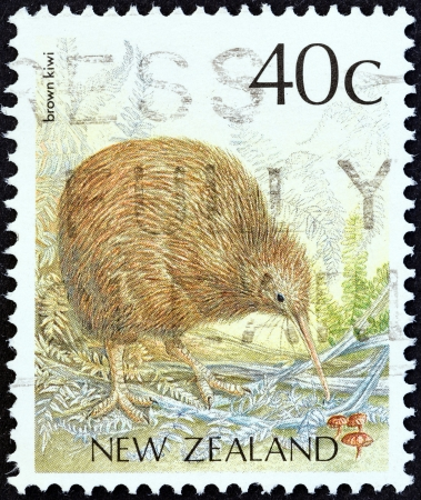 NEW ZEALAND - CIRCA 1988  A stamp printed in New Zealand from the  Native Birds  issue shows a Brown kiwi  Apteryx mantelli , circa 1988