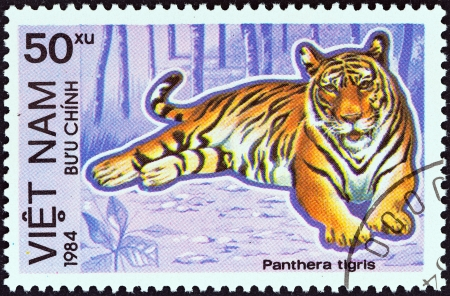 VIETNAM - CIRCA 1984  A stamp printed in North Vietnam from the  Protected Animals   issue shows Tiger  Panthera tigris , circa 1984