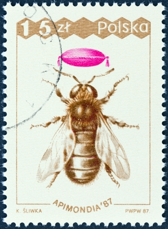 polska: POLAND - CIRCA 1987  A stamp printed in Poland from the  Apimondia 87, International Bee Keeping Congress, Warsaw  issue shows Drone, circa 1987  Editorial