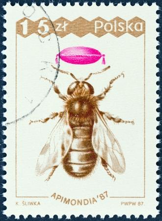 estampilla: POLAND - CIRCA 1987  A stamp printed in Poland from the  Apimondia 87, International Bee Keeping Congress, Warsaw  issue shows Drone, circa 1987  Editorial