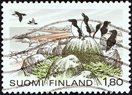 estampilla: FINLAND - CIRCA 1981  A stamp printed in Finland from the  National Parks  issue shows Razorbills, Eastern Gulf National Park, circa 1981