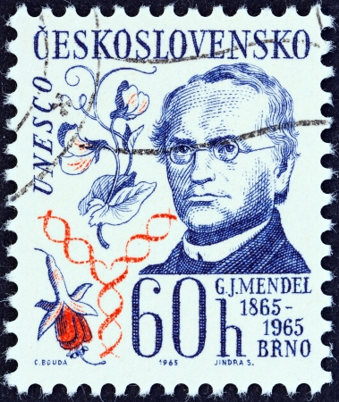 heredity: CZECHOSLOVAKIA - CIRCA 1965  A stamp printed in Czechoslovakia shows Gregor Johann Mendel  publication centenary in Brno of his study of heredity , circa 1965  Editorial