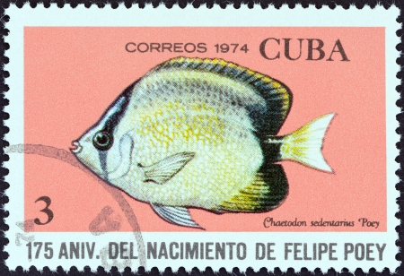 chaetodon: CUBA - CIRCA 1974  A stamp printed in Cuba from the  175th birth anniversary of naturalist Felipe Poey  issue shows a Reef butterflyfish  Chaetodon sedentarius , circa 1974   Editorial