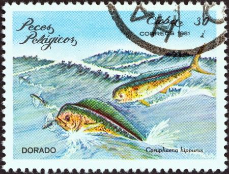 estampilla: CUBA - CIRCA 1981  A stamp printed in Cuba from the  Pelagic Fish  issue shows Dorado  Coryphaena hippurus , circa 1981   Editorial