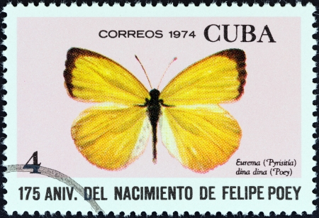 cuba butterfly: CUBA - CIRCA 1974  A stamp printed in Cuba from the  175th birth anniversary of naturalist Felipe Poey  issue shows a Dina Yellow  Eurema dina dina  butterfly, circa 1974
