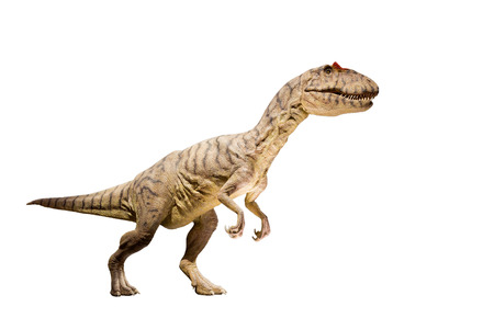 Allosaurus dinosaur isolated  photo