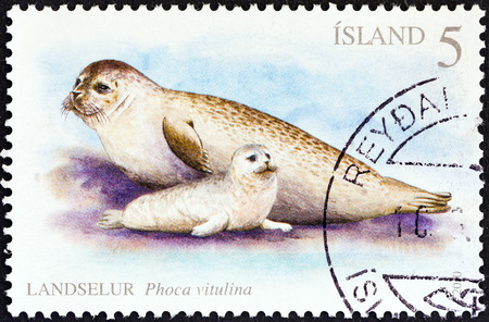ICELAND - CIRCA 2010  A stamp printed in Iceland shows Harbor seals  Phoca vitulina , circa 2010