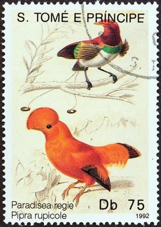estampilla: SAO TOME AND PRINCIPE - CIRCA 1992  A stamp printed in Sao Tome and Principe from the  Birds  issue shows Paradisea regie  pipra rupicole , circa 1992  Editorial