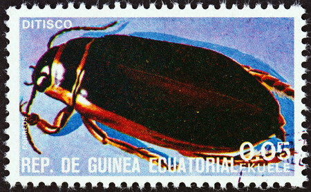 EQUATORIAL GUINEA - CIRCA 1978  A stamp printed in Equatorial Guinea from the  Insects   issue shows Dytiscus, circa 1978