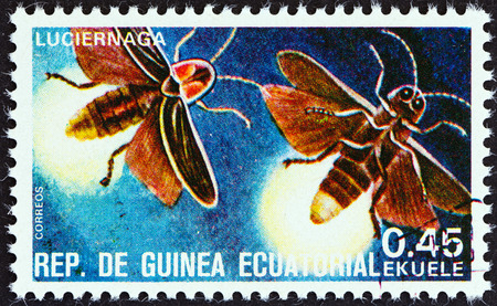 guinea worm: EQUATORIAL GUINEA - CIRCA 1978  A stamp printed in Equatorial Guinea from the  Insects   issue shows Lampyridae, circa 1978