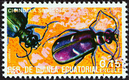 cicindela: EQUATORIAL GUINEA - CIRCA 1978  A stamp printed in Equatorial Guinea from the  Insects   issue shows Cicindela silvicola, circa 1978