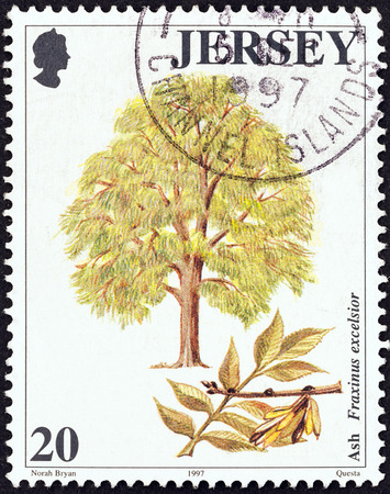 excelsior: JERSEY - CIRCA 1997  A stamp printed in United Kingdom from the  Trees  issue shows Ash tree  Fraxinus excelsior , circa 1997