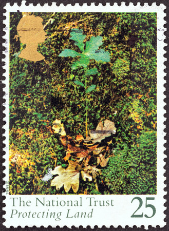 the national trust: UNITED KINGDOM - CIRCA 1995  A stamp printed in United Kingdom from the  Centenary of The National Trust  issue shows Oak seedling, circa 1995
