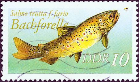 salmo trutta: GERMAN DEMOCRATIC REPUBLIC - CIRCA 1987  A stamp printed in Germany from the  Freshwater Fishes  issue shows a Brown trout  Salmo trutta , circa 1987