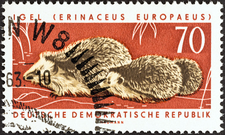 GERMAN DEMOCRATIC REPUBLIC - CIRCA 1963  A stamp printed in Germany from the  Fauna Protection Campaign  2nd series   issue shows West European hedgehogs, circa 1963