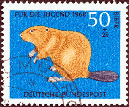 GERMANY - CIRCA 1968  A stamp printed in Germany from the  Child Welfare  issue shows Eurasian beaver  Castor fiber , circa 1968   Editorial