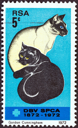 SOUTH AFRICA - CIRCA 1972  A stamp printed in South Africa issued for the Centenary of Societies for the Prevention of Cruelty to Animals shows Black and Siamese Cats, circa 1972