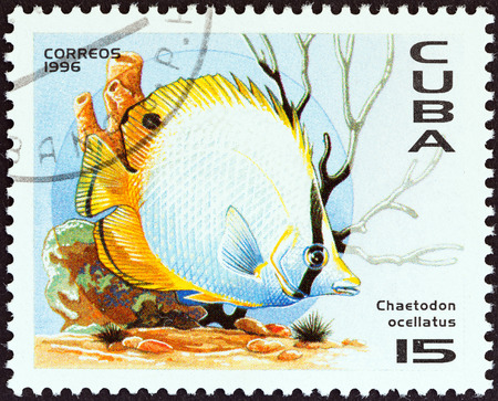 CUBA - CIRCA 1996  A stamp printed in Cuba from the  Caribbean Animals   issue shows Spot-finned butterflyfish  Chaetodon ocellatus , circa 1996   Editorial