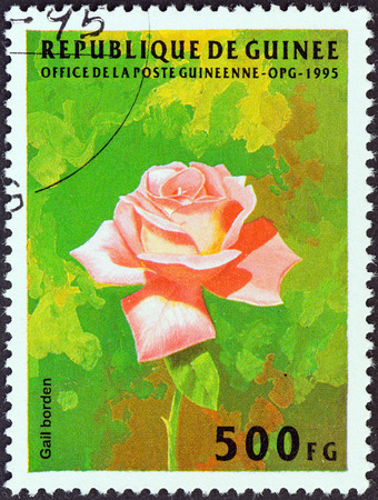 GUINEA - CIRCA 1995  A stamp printed in Guinea from the  Flowers  issue shows Rose  Gail Borden , circa 1995