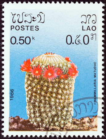sello: LAOS - CIRCA 1986  A stamp printed in Laos from the  Cacti  issue shows Mammillaria matudae, circa 1986