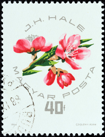 hale: HUNGARY - CIRCA 1964  A stamp printed in Hungary from the  National Peaches and Apricots Exhibition, Budapest  issue shows J H  Hale designs of peaches or apricots, circa 1964   Editorial
