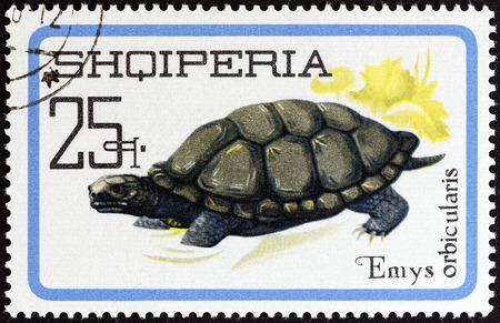 estampilla: ALBANIA - CIRCA 1966  A stamp printed in Albania from the  Reptiles   issue shows European pond turtle  Emys orbicularis , circa 1966  Editorial
